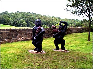 Gorillas in Mytholmroyd